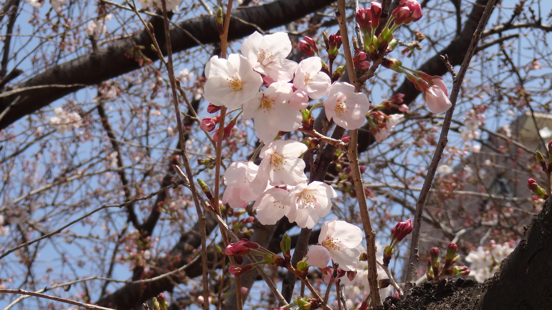 小さな春見つけてきました(*´∀`*) エルステージ小田井